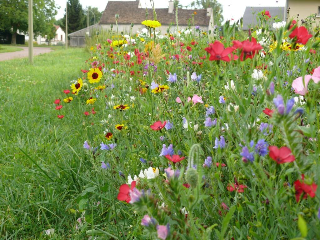 Gazon prairie fleurie de chez Nova flore