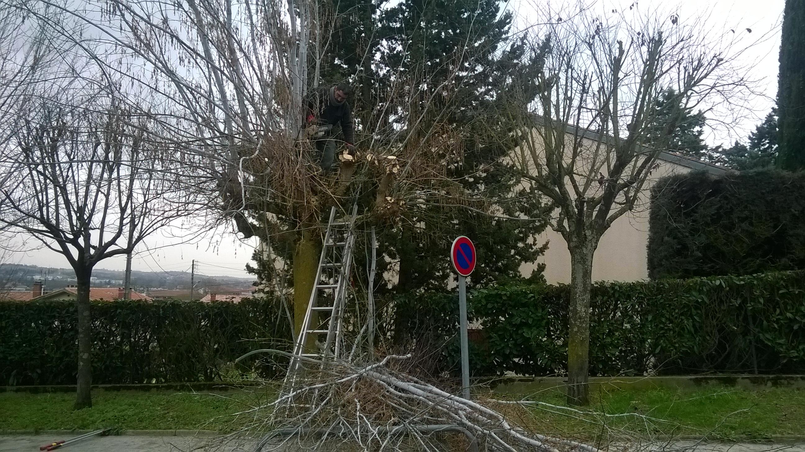 Élagage d'arbres à Toulouse