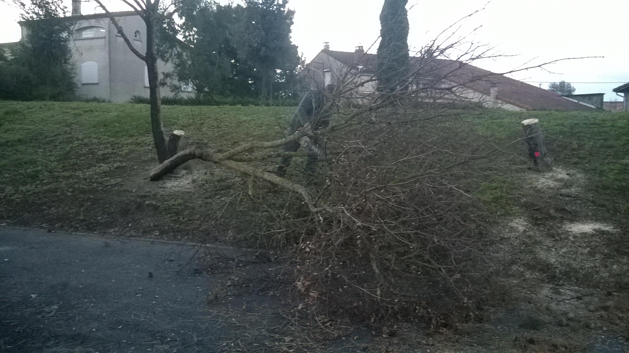 Plantation d'arbres à Colomiers : Abattage des arbres