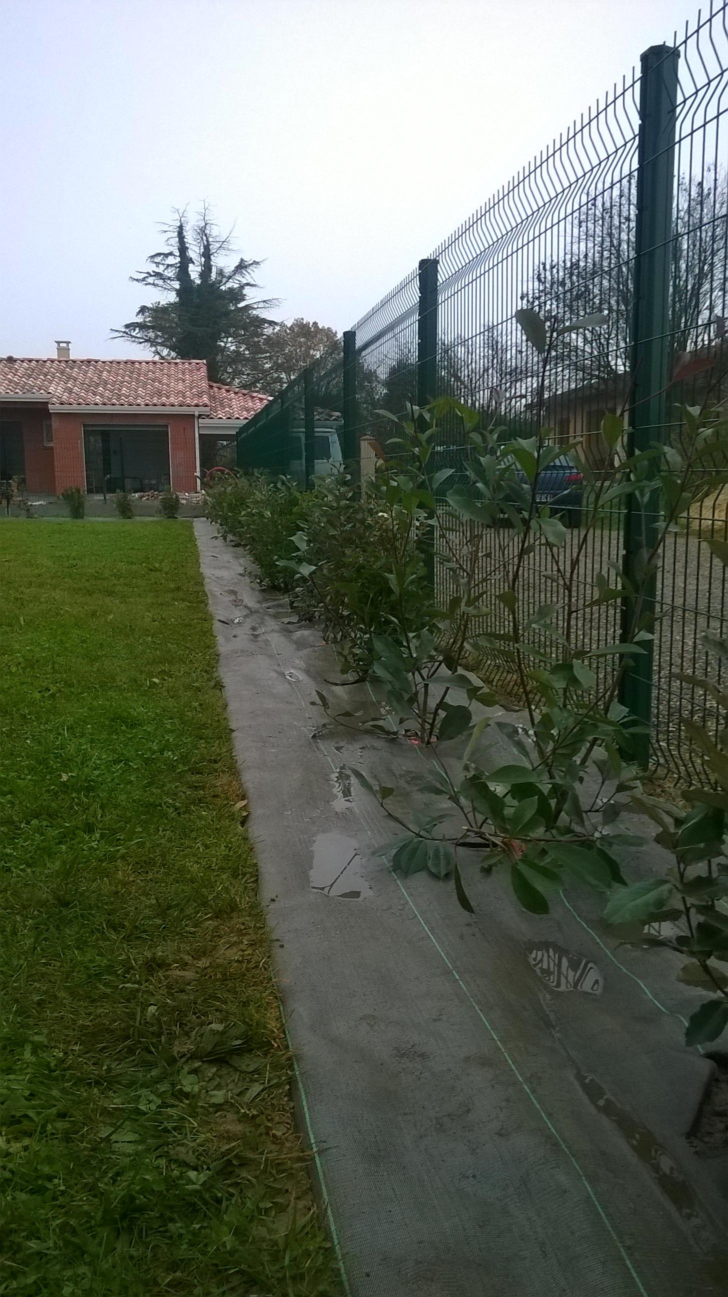Plantation d'une haie variée : Photinia Red Robin, Elaeagnus ebbingei, Viburnum tinus, Prunus lusitanica, Euonymus japonicus